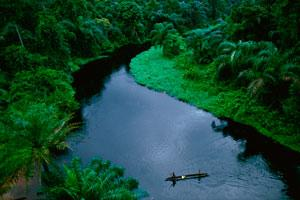 The dense rain forest of the Republic of the Congo