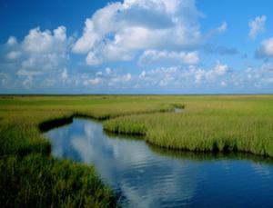Teeming with life, the Mississippi's marshes could all look like this