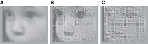 (a) is the original image presented to the mice,  (b) shows the image actually seen by the mice using the prosthetic retina system, and (c) is what the mice would have seen using existing retinal implant technology
