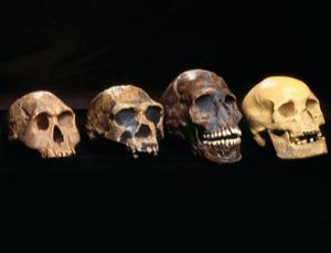 Evolving skulls