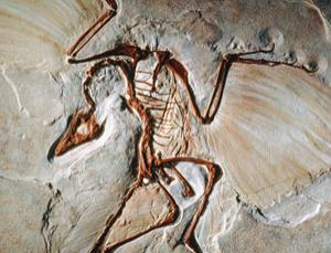 Archaeopteryx is an icon of evolution, but is it really a bird?