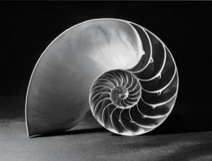 Perfect harmony: the Fibonacci spiral shapes evolutionary change