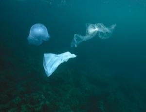 Trashcan ocean