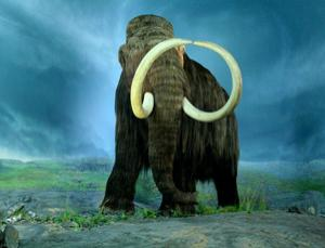We now know much more about the woolly mammoth
