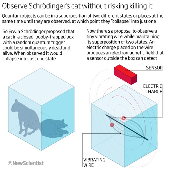 Observe Schrödinger's cat without risking killing it