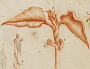 Histology takes root . See more in our gallery here.