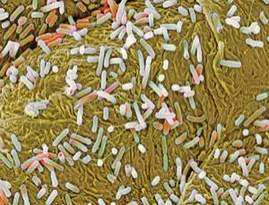 Your gut microbes act like an extra organ with many functions