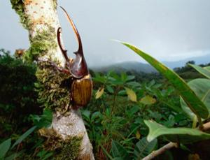 One in a (few) million, up a Panamanian tree