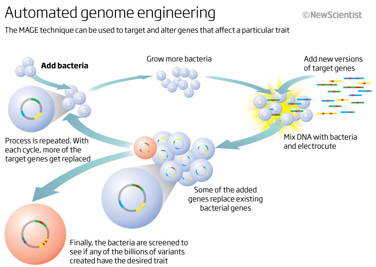 an introduction to the history of genetic engineering or cloning While genetic engineering can lead to introduction of greater quality traits in organisms, it can also have undesirable side effects to understand the pros and cons of genetic engineering, read on.
