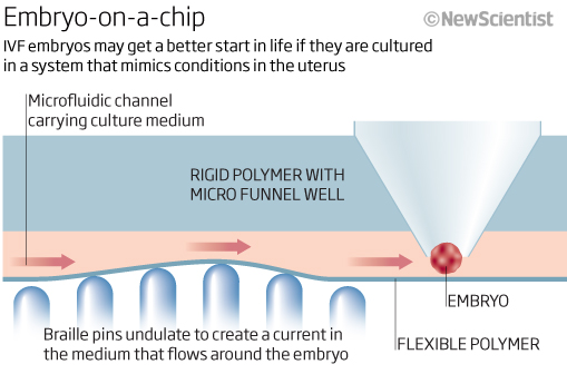 Embryo-on-a-chip