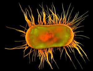 Bacteria use their pili to move