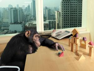 Though clever, chimps are unable to grasp abstract concepts