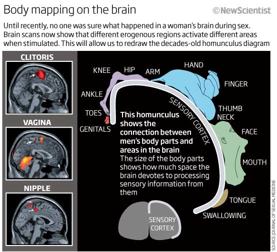 Body mapping on the brain