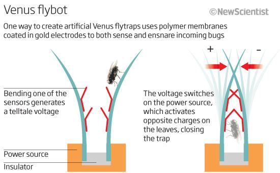 Robot Venus Flytraps Could Eat Bugs For Fuel New Scientist