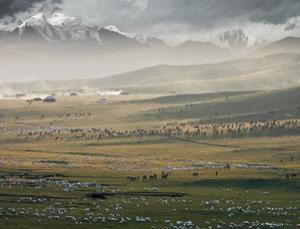 Ranch in the highlands of Qinghai Province in China