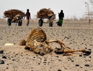 Wajir residents walks past carcasses of livestock during the prolonged drought of 2011 in Nairobi