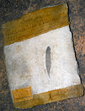 The crucial black feather (Image: WitmerLab at Ohio University)