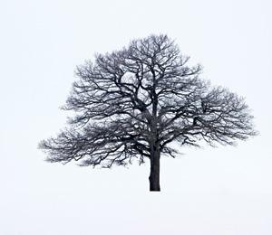 Da Vinci code for trees provides wind protection