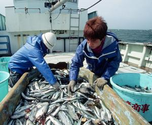 Can web technology prevent overfishing?