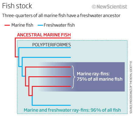 Most fish in the sea evolved on land
