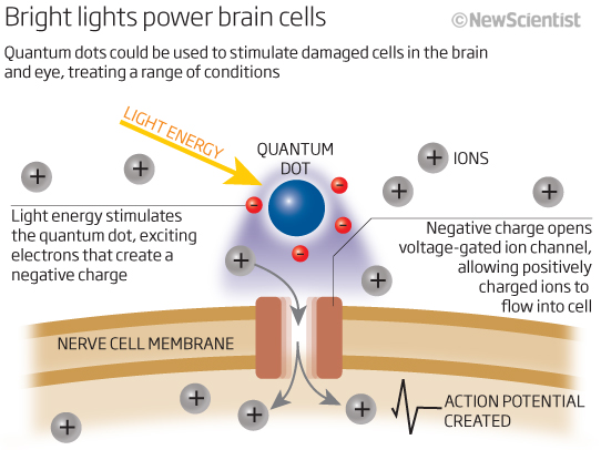 Quantum dots control brain cells for the first time