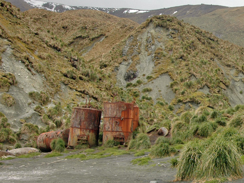 Penguin digesters on Macquarie Island – used for boiling the fat off king penguins