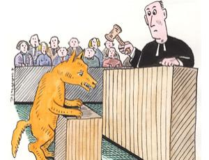 Dingoes in the dock