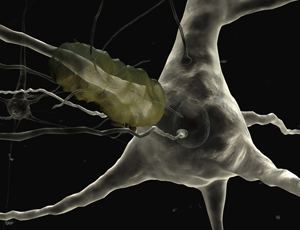 Rebooted neurons halt brain degeneration in mice