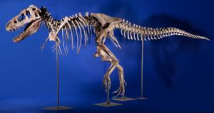 Tarbosaurus fossils have only ever been found in Mongolia