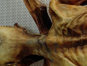 Fatal wound