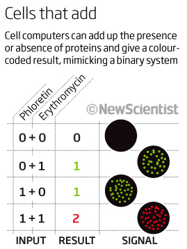 Cells that add