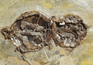 47 million years old… and still doing it