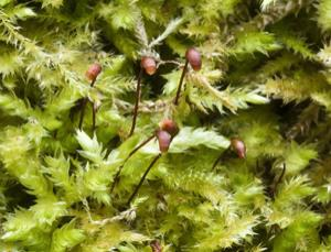 This tiny plant has a big impact on peat bogs' ability to store carbon