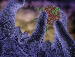 Caught in a trap – an artist's impression of an immune-system macrophage cell getting ready to chomp down a virus