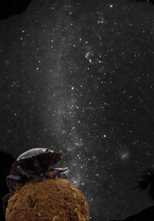 Galactic signpost