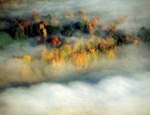 Steamy forests whip up a storm