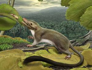 Hypothetical ancestor still has teeth (Image courtesy of Carl Buell)