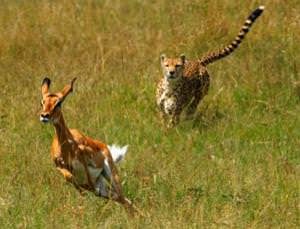 Competing activity between brain regions resembles the perpetual fight between predator and prey
