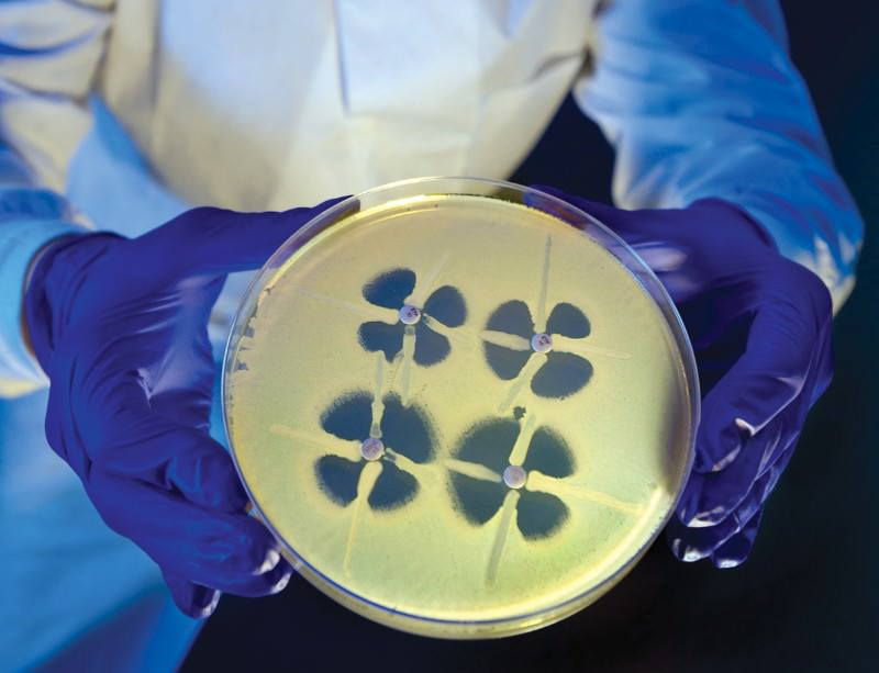 Colonies of the lethal bacterium MRSA