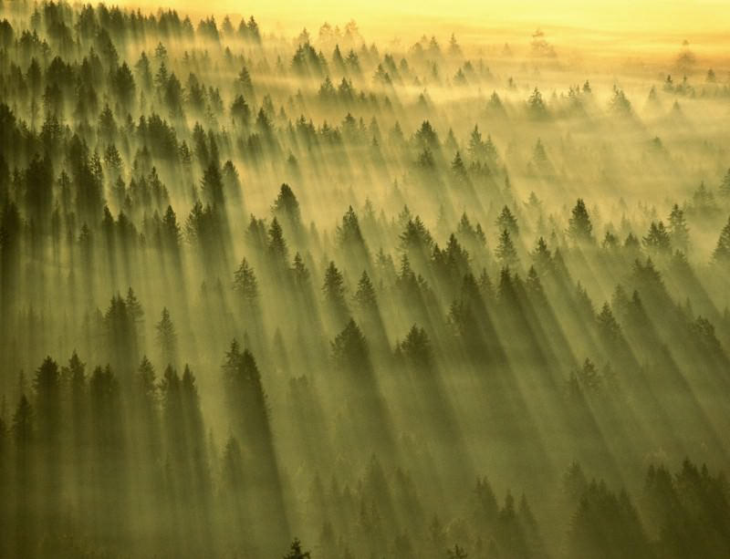 Forests help more clouds form the warmer it gets, but are less help when things start to cool
