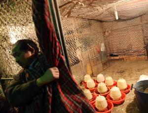 Poultry markets are closed across nine provinces in China