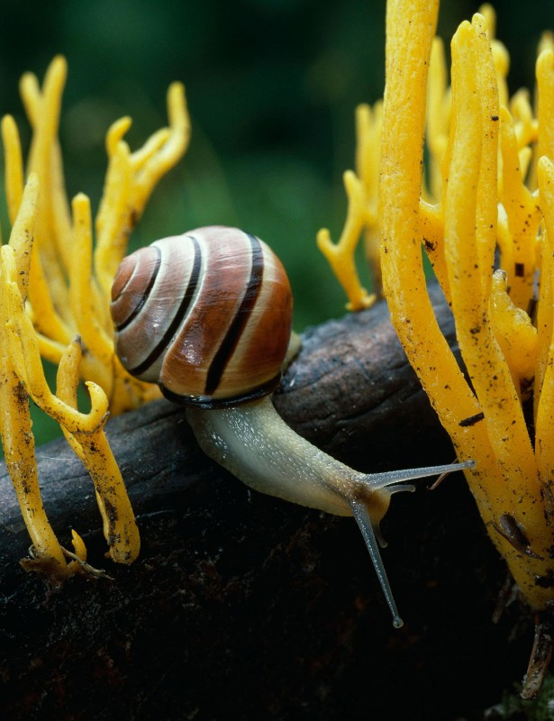 Snail shell stripes reveal Irish origins