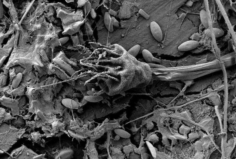 Plastisphere microbes go to sea on flotsam fragments