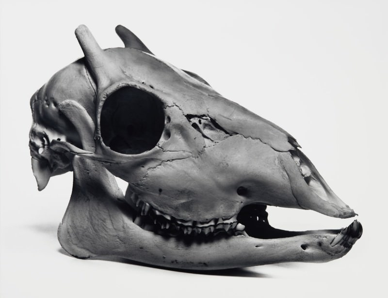 Skull shots: When Irving Penn peeled away the skin