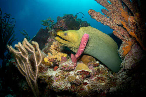 Coral mappers reach Caribbean waters
