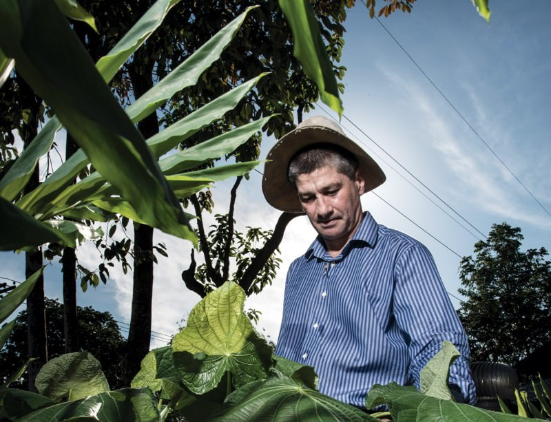 Plants in the Amazon region have never been systematically studied for antimalarial properties