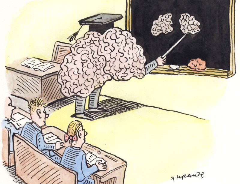 Separating neuromyths from science in education