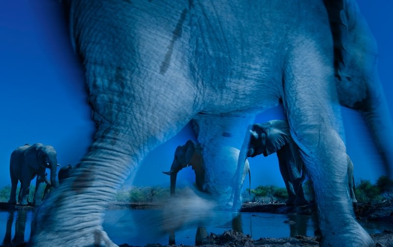 Ghost elephants win Wildlife Photographer of the Year prize
