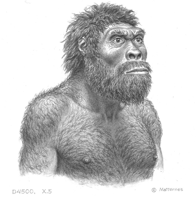 An artist's impression of a Dmanisi hominin H. erectus
