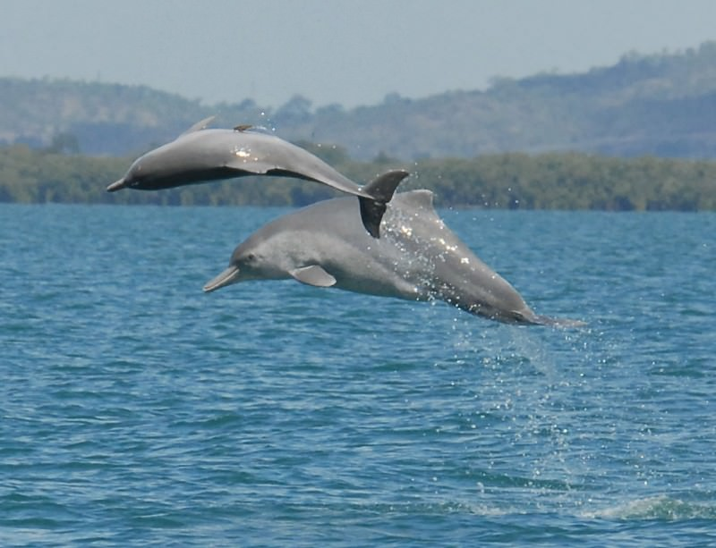 New dolphin species leaps out of Australian waters